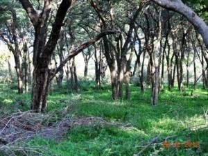 Bome Bosveld