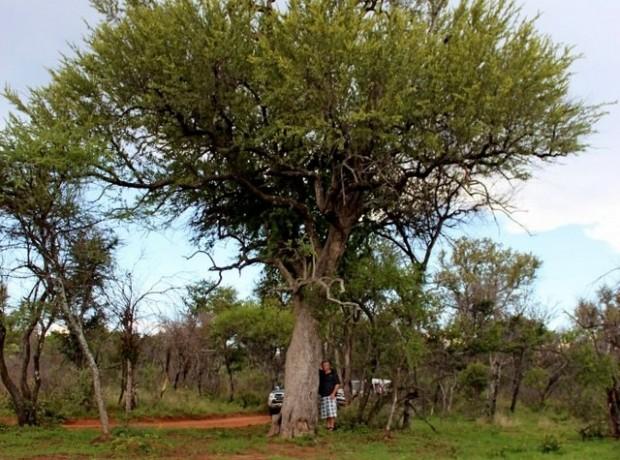 Bome Bosveld 640×480