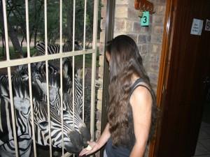 Zebras by Tralies