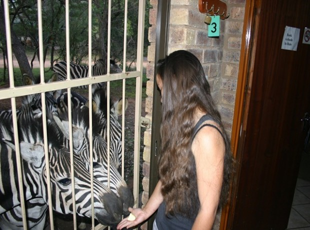 Zebras by Tralies 640×480