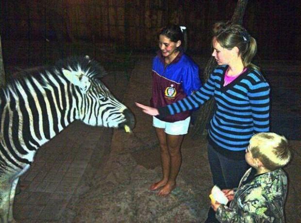 Mak Wild Zebra 640×480