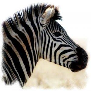 Wild Zebra Logo